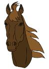 bilde hode på en hest