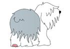 bilde hund - bobtail