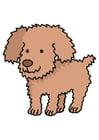 bilde hund