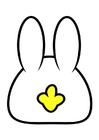 bilde kanin - bakside
