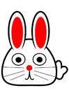 bilde kanin - forside