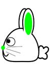 bilde kanin - side