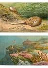 bilde sjødyr